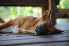 sonno del cane Immagini Stock