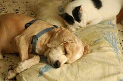 Sonno del cane del gatto Fotografie Stock Libere da Diritti