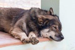 Sonno del cane di Brown Fotografia Stock Libera da Diritti