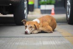 Sonno del cane randagio sul pavimento immagine stock