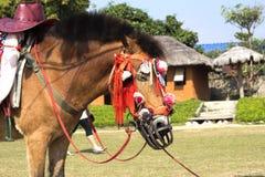 sonno del crine di cavallo nel maehongsorn di pai fotografia stock libera da diritti