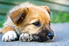 Sonno del cucciolo fotografie stock libere da diritti