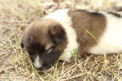 Sonno del cucciolo di cane Fotografia Stock