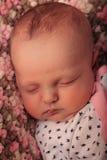 Sonno del dolce neonato Fotografie Stock Libere da Diritti