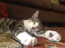 Sonno 4 del gattino Fotografia Stock Libera da Diritti
