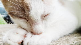 Sonno del gattino fotografia stock
