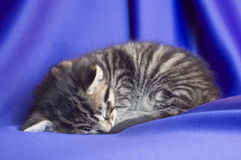 Sonno del gattino Fotografie Stock