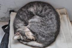 Sonno del gattino arricciato Fotografie Stock