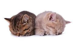 Sonno del gattino dei due Britannici Fotografia Stock Libera da Diritti