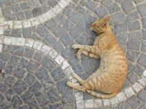 sonno del gatto Fotografie Stock Libere da Diritti