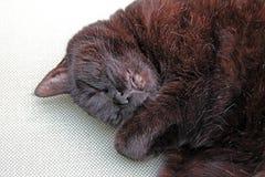 Sonno del gatto nero Fotografie Stock