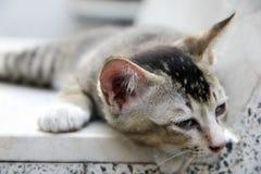 Sonno del gatto sulla sedia fotografie stock libere da diritti