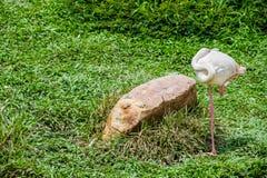 Sonno dell'uccello del fenicottero stando sul campo Immagini Stock