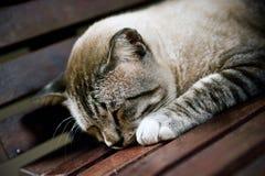 Sonno pacificamente Fotografie Stock
