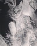Sonno rilassato del gatto del gatto felice Immagini Stock Libere da Diritti