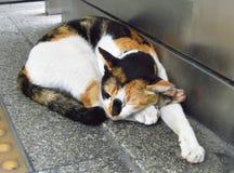 Sonno senza tetto del gatto sul pavimento Immagini Stock