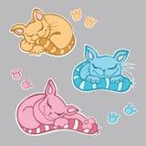sonno sveglio dei gattini Immagine Stock