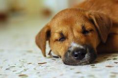 Sonno sveglio del cucciolo Fotografia Stock