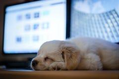 Sonno sveglio del puppie Fotografia Stock