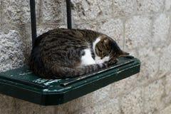 Sonno sveglio gatto grigio e bianco, ha dormito sulla tavola di legno verde nella via, concetto - rilassi Sonno felice del gatto  fotografia stock libera da diritti
