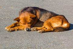 sonno tailandese del cane su una strada Immagine Stock Libera da Diritti