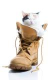 Sono adorável do gatinho Foto de Stock