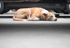 Sono do cão disperso no assoalho no parque de estacionamento imagem de stock