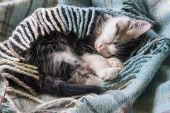 Sono do gatinho do gato malhado envolvido na cobertura de lãs Imagens de Stock