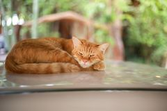 Sono do gato no carro do telhado Imagem de Stock Royalty Free