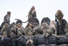 Sono dos macacos sobre o templo Imagens de Stock