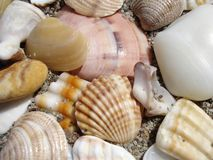 Sono dos SeaShells fotografia de stock royalty free
