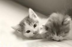 Sono e jogo da vaquinha do gato do bebê Fotografia de Stock Royalty Free