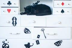 Sono fantástico do gato preto, tema de Alice no país das maravilhas fotografia de stock royalty free