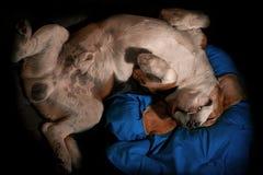 Sono feliz do cão de cabeça para baixo em um descanso Imagem de Stock Royalty Free