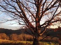 Sono l'albero Fotografie Stock Libere da Diritti