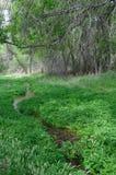 Sonoita Nebenfluss-natürliche Erhaltung Lizenzfreies Stockbild