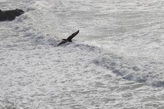 Sonoma Coast State Park -  northwestern Sonoma County, California Royalty Free Stock Image