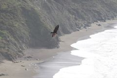 Sonoma Coast State Park -  northwestern Sonoma County, California Stock Images