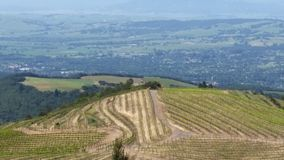 Sonoma County grape views. 707 Royalty Free Stock Photography
