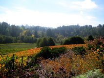 Sonoma County vineyards (California) Stock Photos