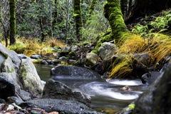 Sonoma Creek flowing through Enchanted Forrest  at Sugarloaf Ridge State Park, California stock photos