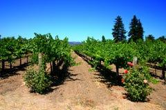 Sonoma en Napa Vallei, Californië stock afbeelding