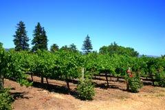 Sonoma en Napa Vallei, Californië stock foto
