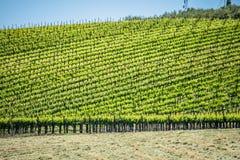 Sonoma en vinyards van de napavallei in Californië stock fotografie