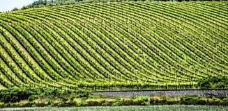 Sonoma och Napa Valley vinyards i Kalifornien royaltyfria bilder