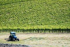 Sonoma- und Napa- Valleyvinyards in Kalifornien lizenzfreies stockfoto