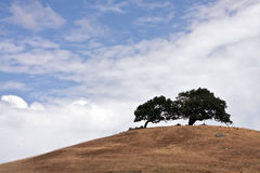 Sonoma Valley California Trees Royalty Free Stock Image