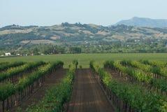 Sonoma Valley Vineyards Royalty Free Stock Image