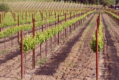 Sonoma Valley Vineyards Stock Photos