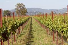Sonoma Valley Vineyards Royalty Free Stock Photos